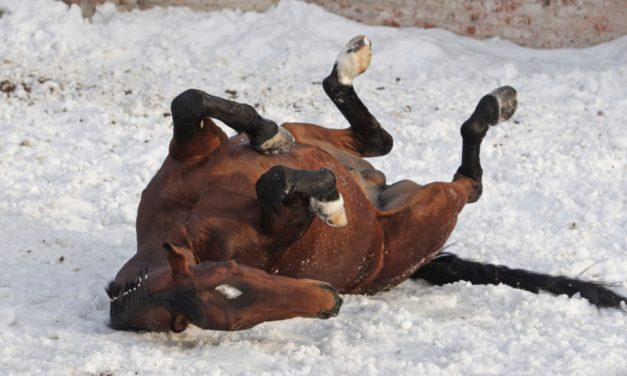Poll Recap: Cold-Weather Colic
