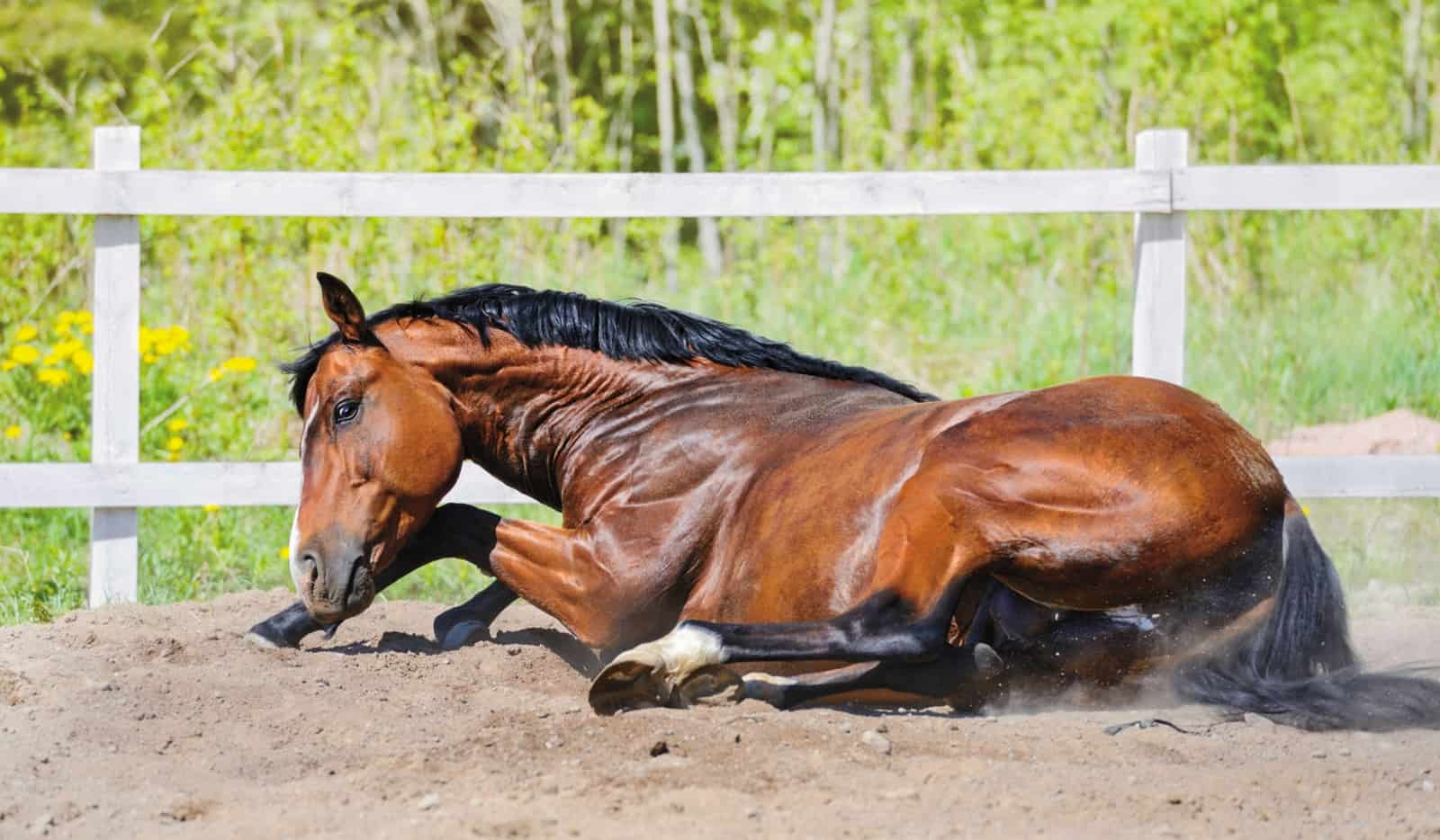 What Type of Colic Is It?