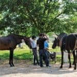 Biosecurity for Show Horses