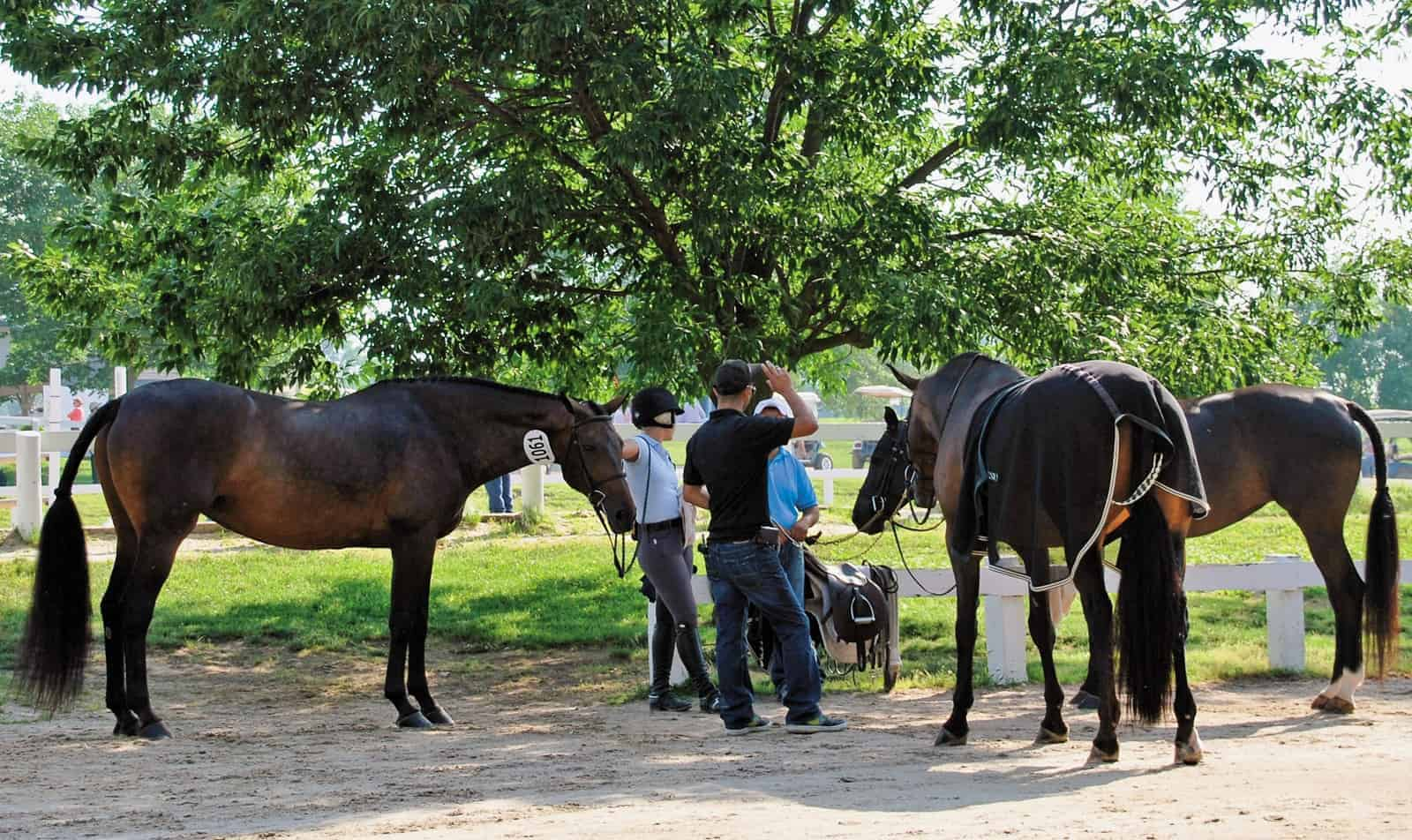 Biosecurity for Show Horses – The Horse