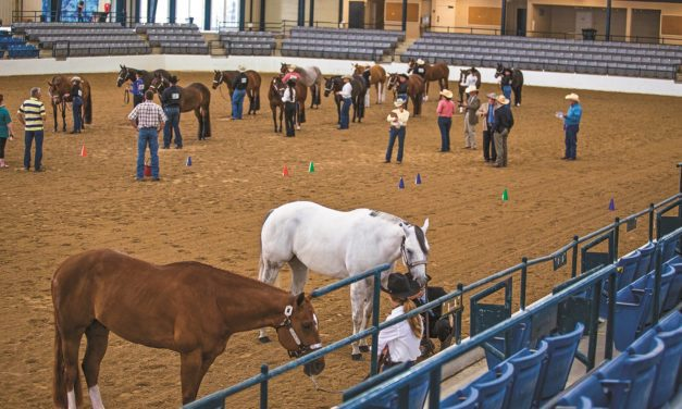 Using Computer Simulation to Prevent Equine Disease