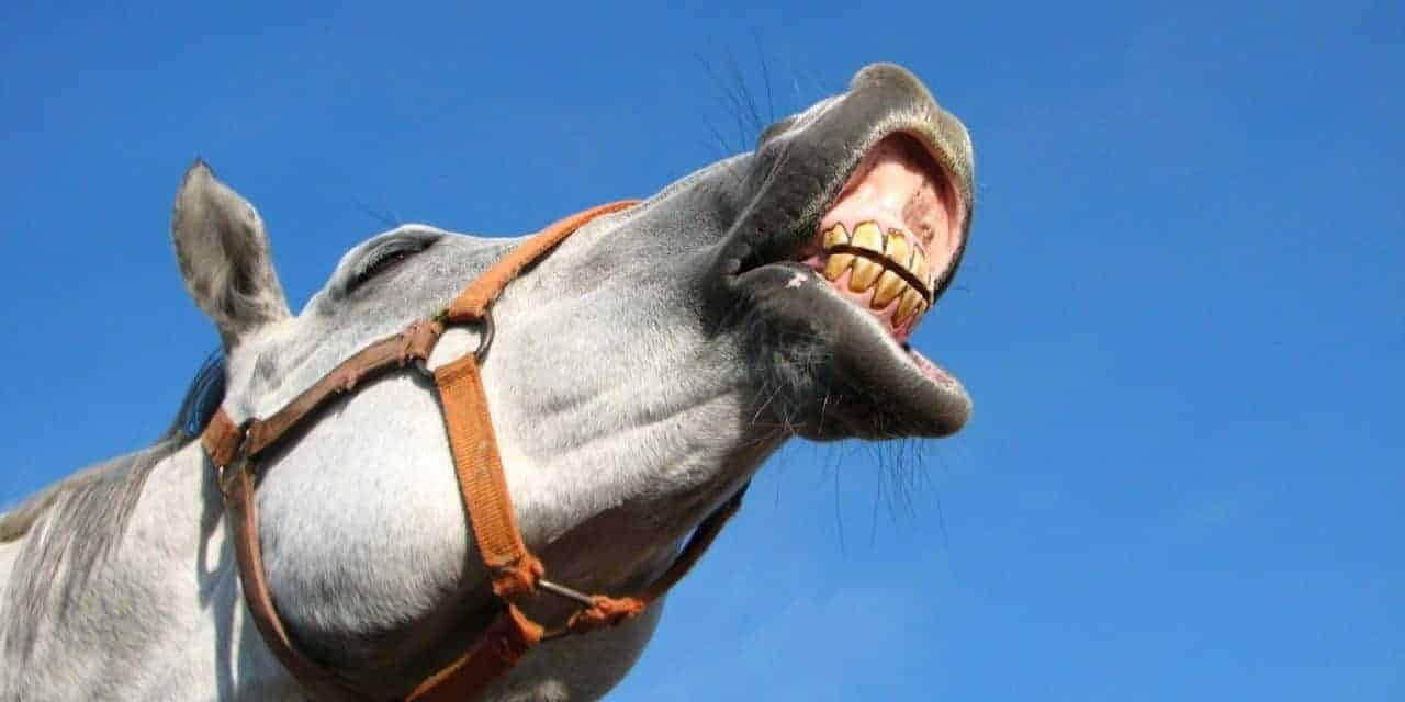 20 Things Your Horse\'s Teeth are Telling You – The Horse