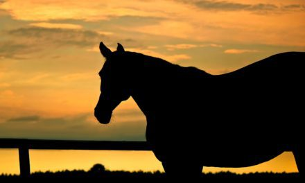 Understanding the Mare's Transitional Period