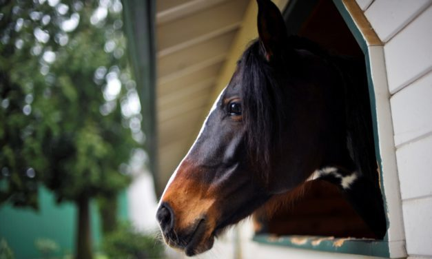 Most Horses With Inflammatory Airway Disease Exposed to Fungi