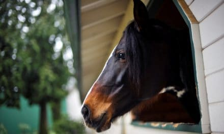 Barn Air Quality Affects Horses' Breathing