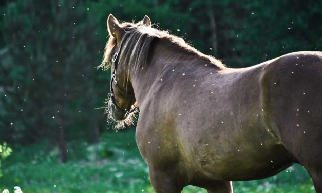 Mosquito-Borne Disease: Is Your Horse at Risk?