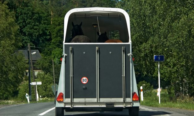 How Often Does Trailer-Driver Error Cause Horse Injury?