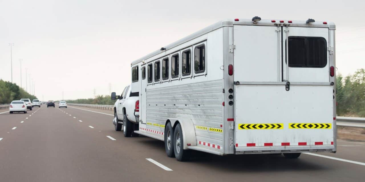 How do Horses Get Hurt During Transport?