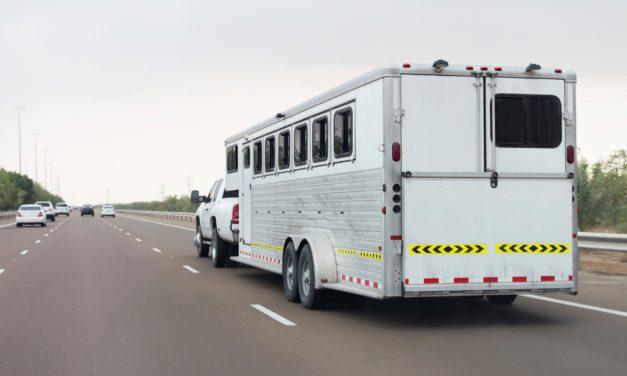 Washington Waives Import Paperwork for Evacuating Horses