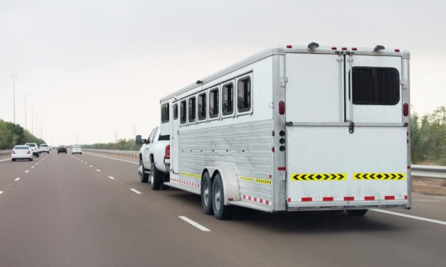 Long-Haul Transport and Horse Health Risks
