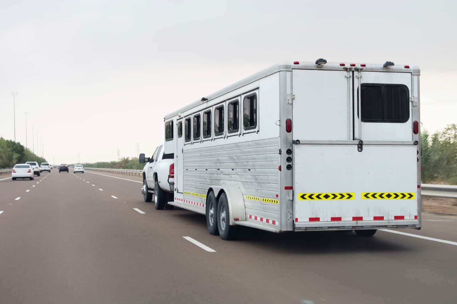 Wildfire Season: Horse Evacuation During COVID-19