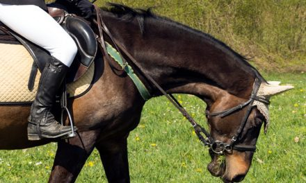Poor Performance: Is Your Horse Affected?