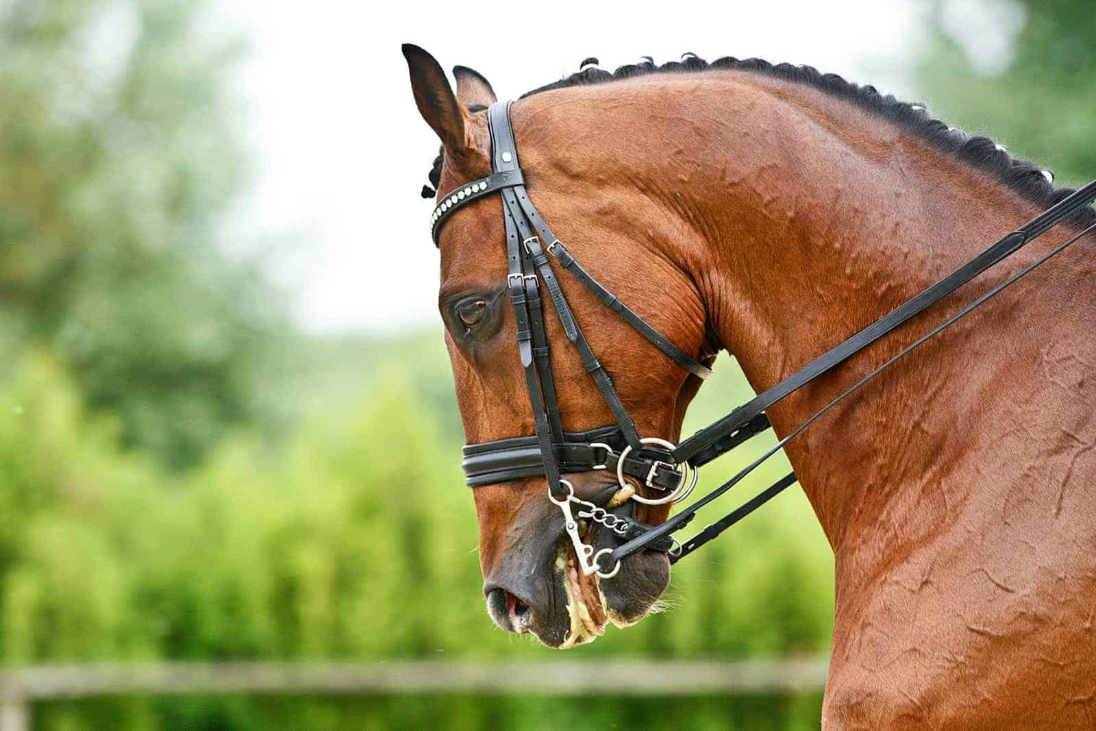 Equine Dental Care: Painful Points and Uneven Arcades – The