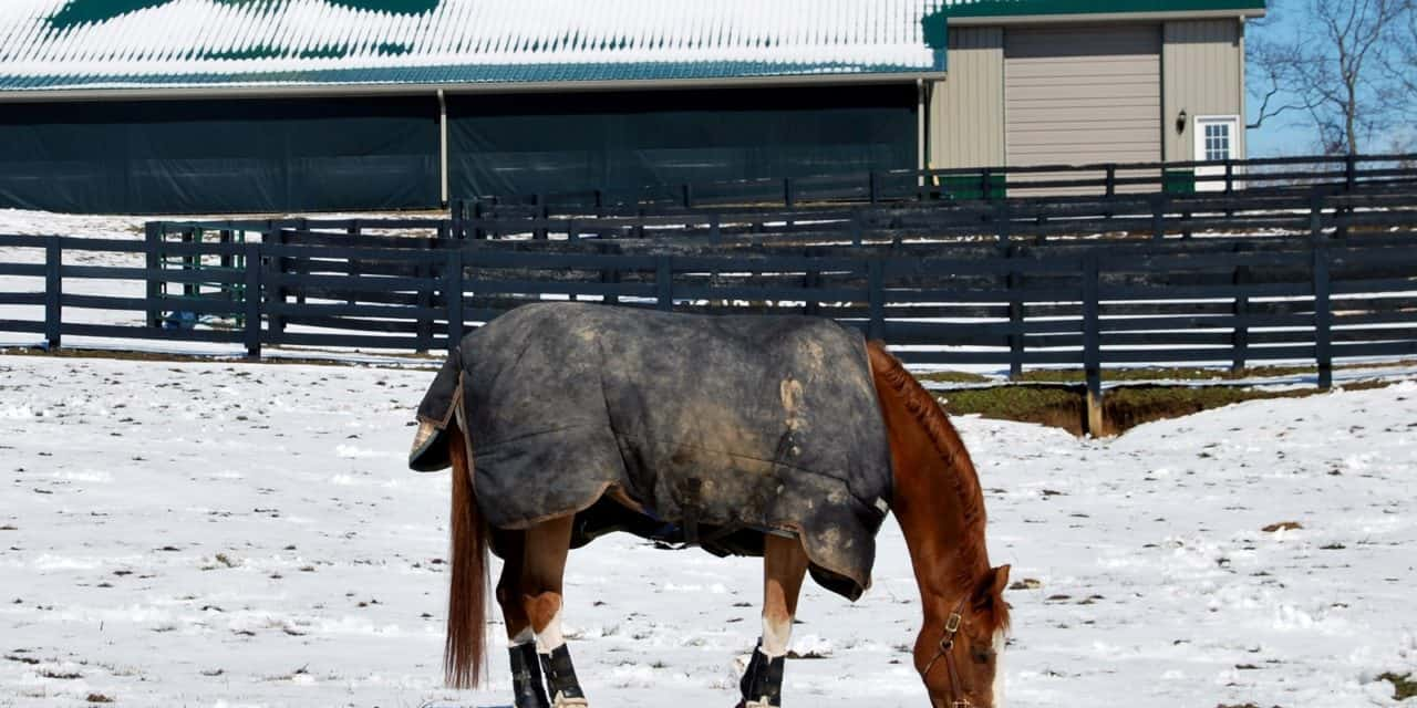 Poll Recap Keeping Horse Blankets Clean The