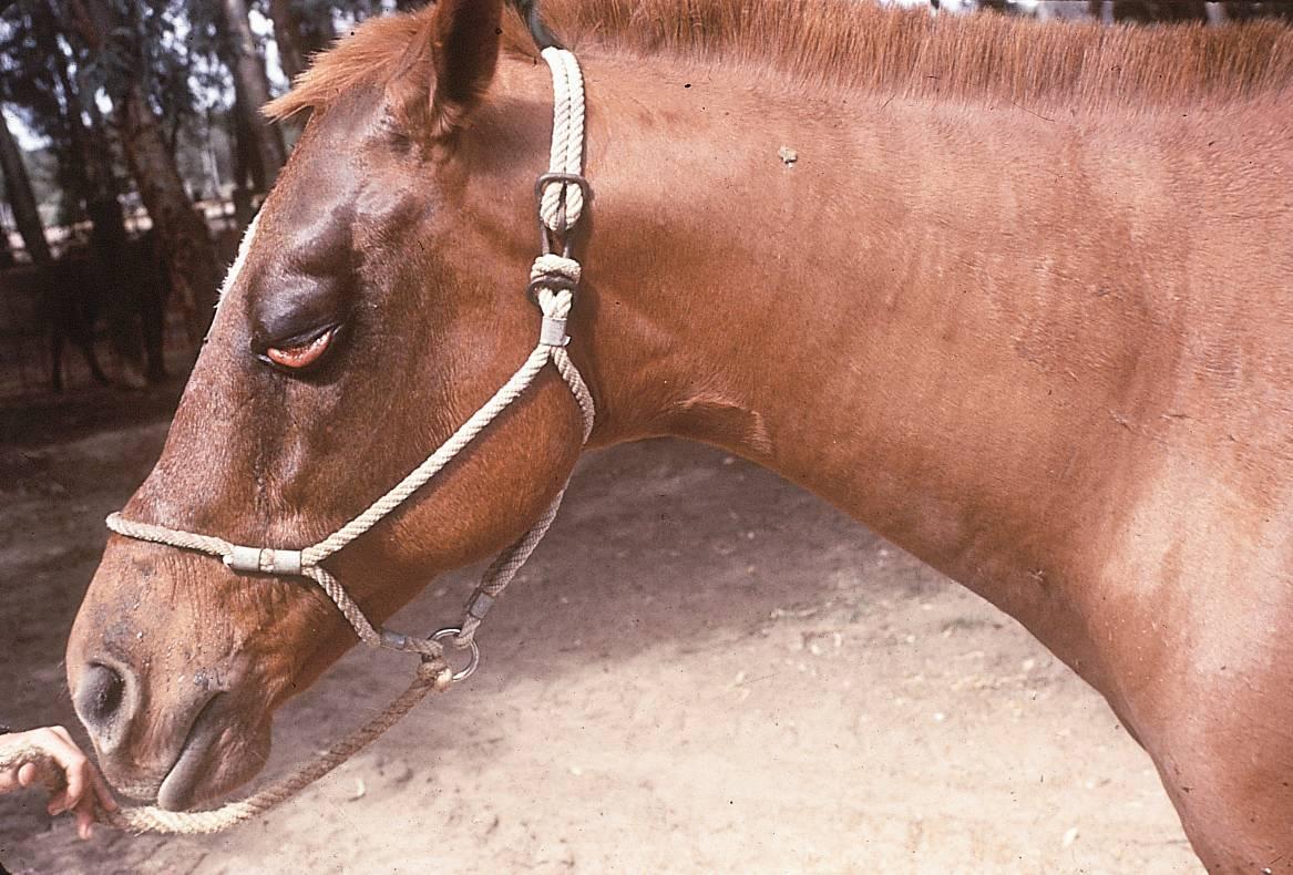 African Horse Sickness Update