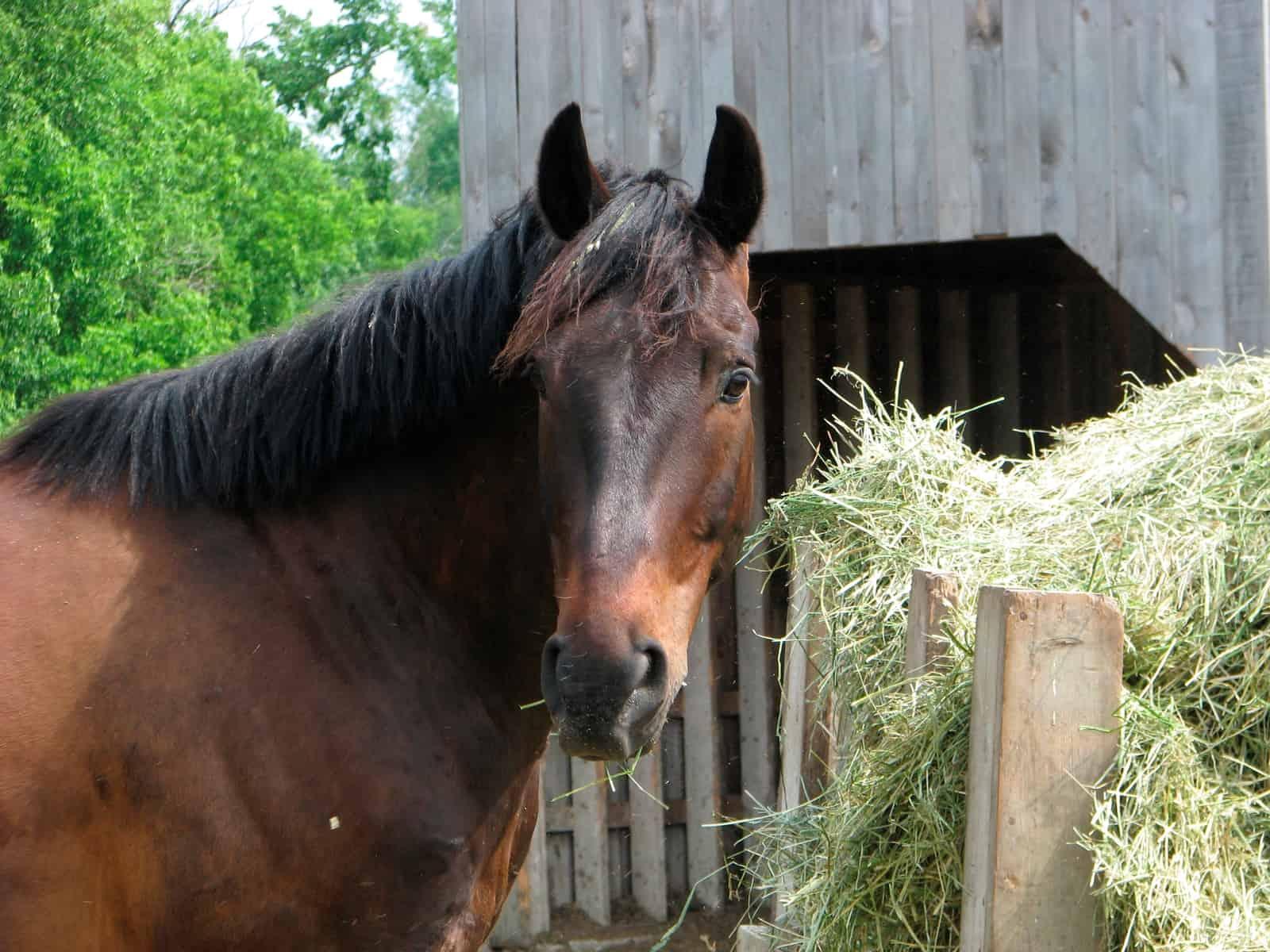 Trace Mineral Basics: Cobalt – The Horse