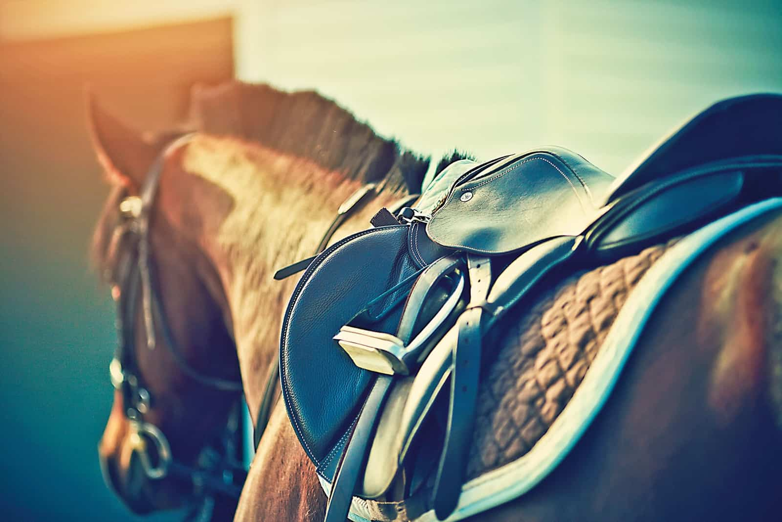 Does Your Horse's Saddle Fit?