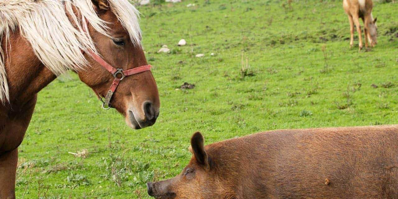 Horses Afraid of Other Species – The Horse