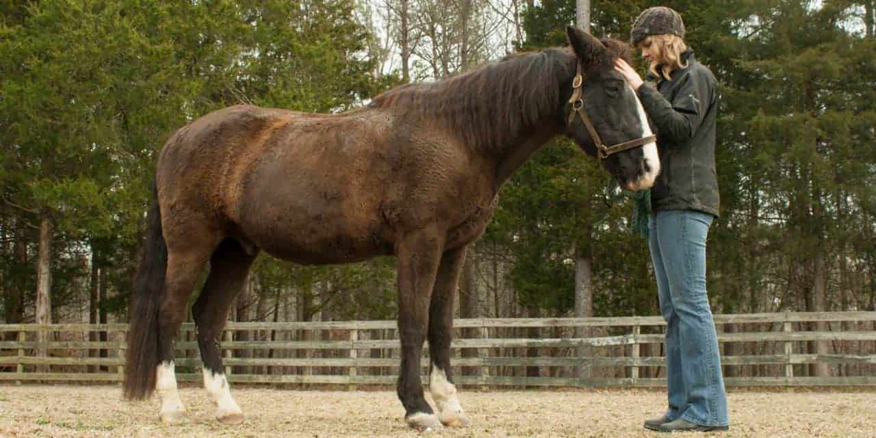 Managing Horses with PPID (Equine Cushing's)