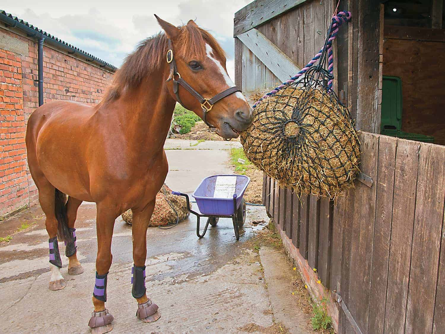 should my horse exercise on an empty stomach