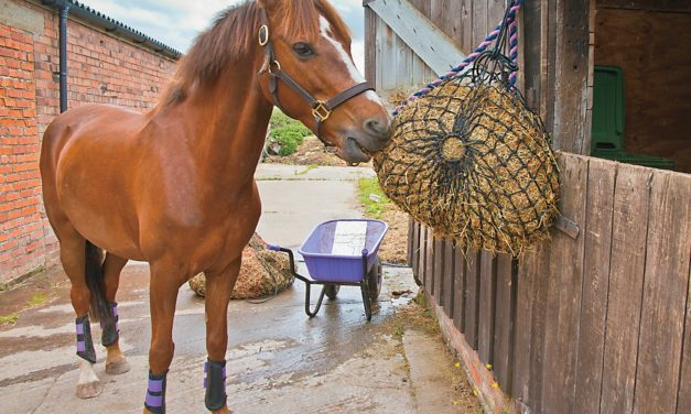 Hay for Horse Health