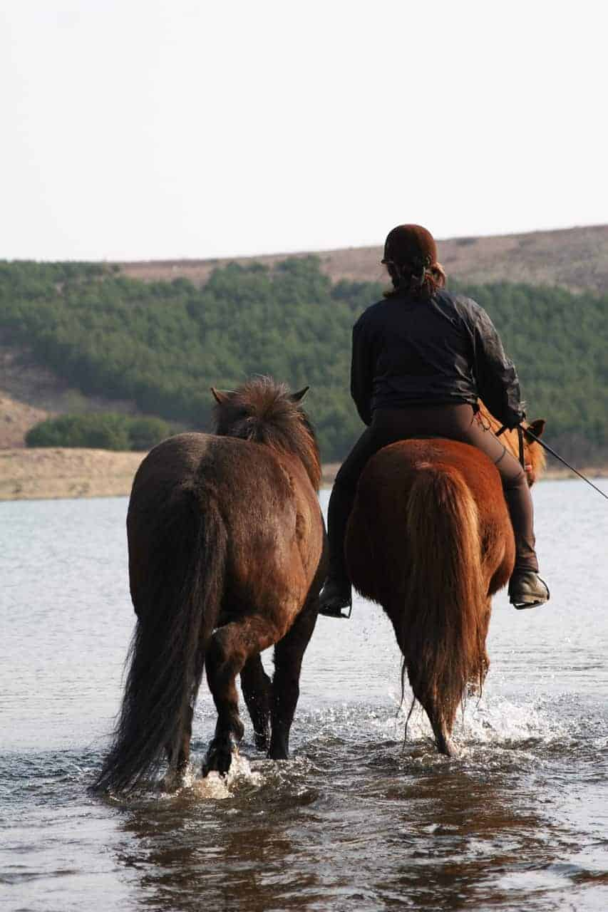 How to Teach a Horse to Cross Water