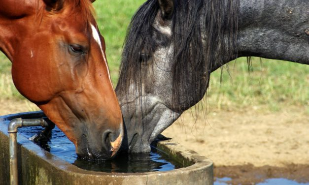 Unsafe Water Can Cause Deadly Iron Overload in Horses