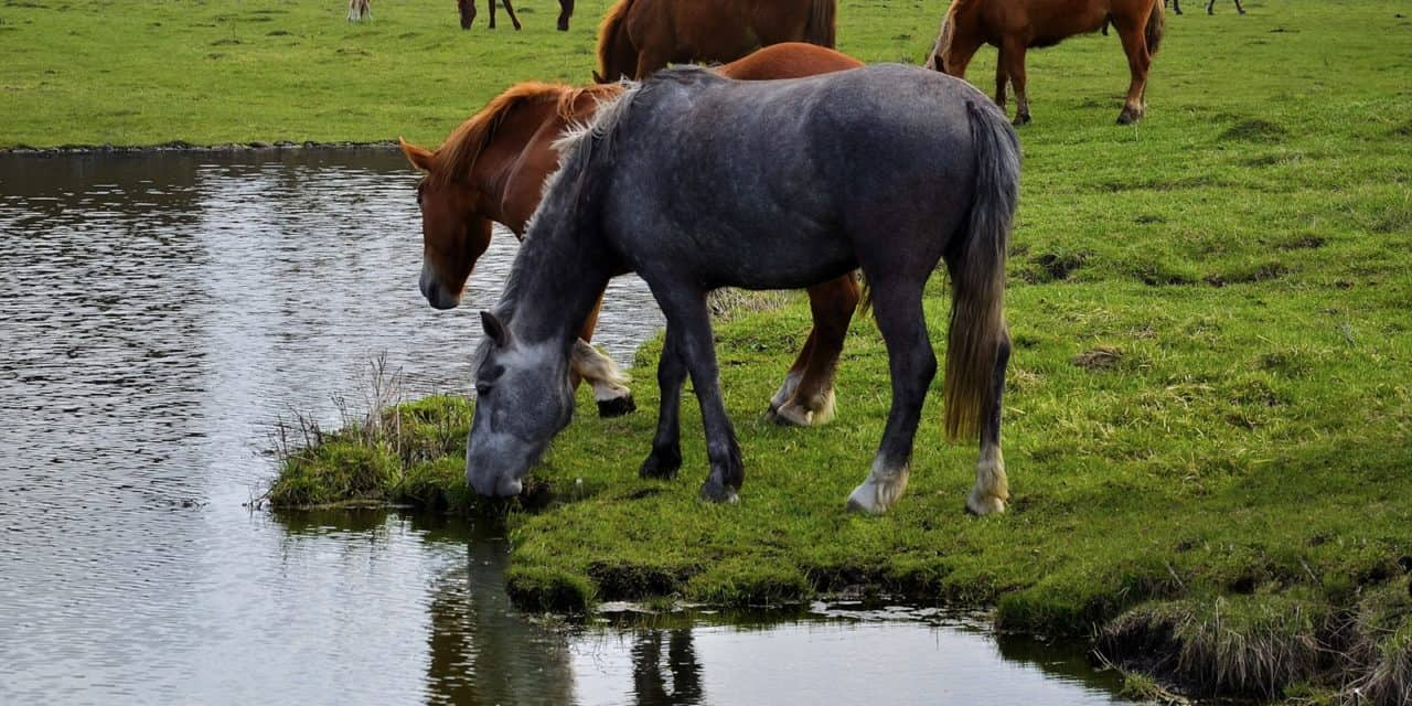 Potomac Horse Fever Detected in Maryland