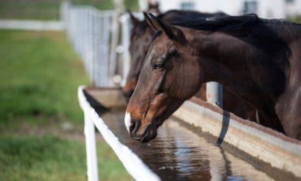 Your Horse's Water Sources: Things to Consider