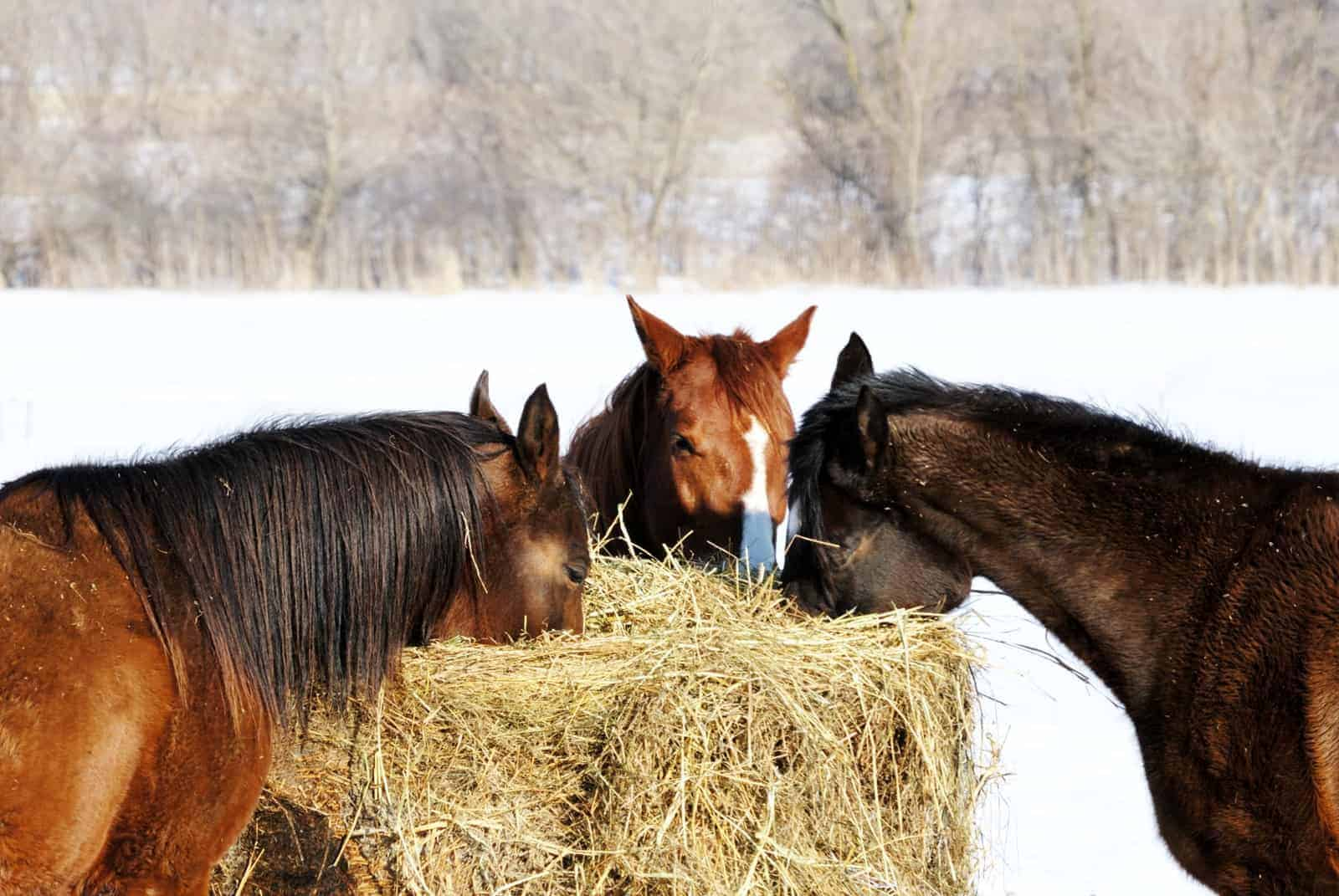 Horses Require Extra Attention When Temperatures Plummet