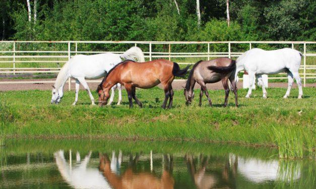 Two Potomac Horse Fever Cases Confirmed in Massachusetts