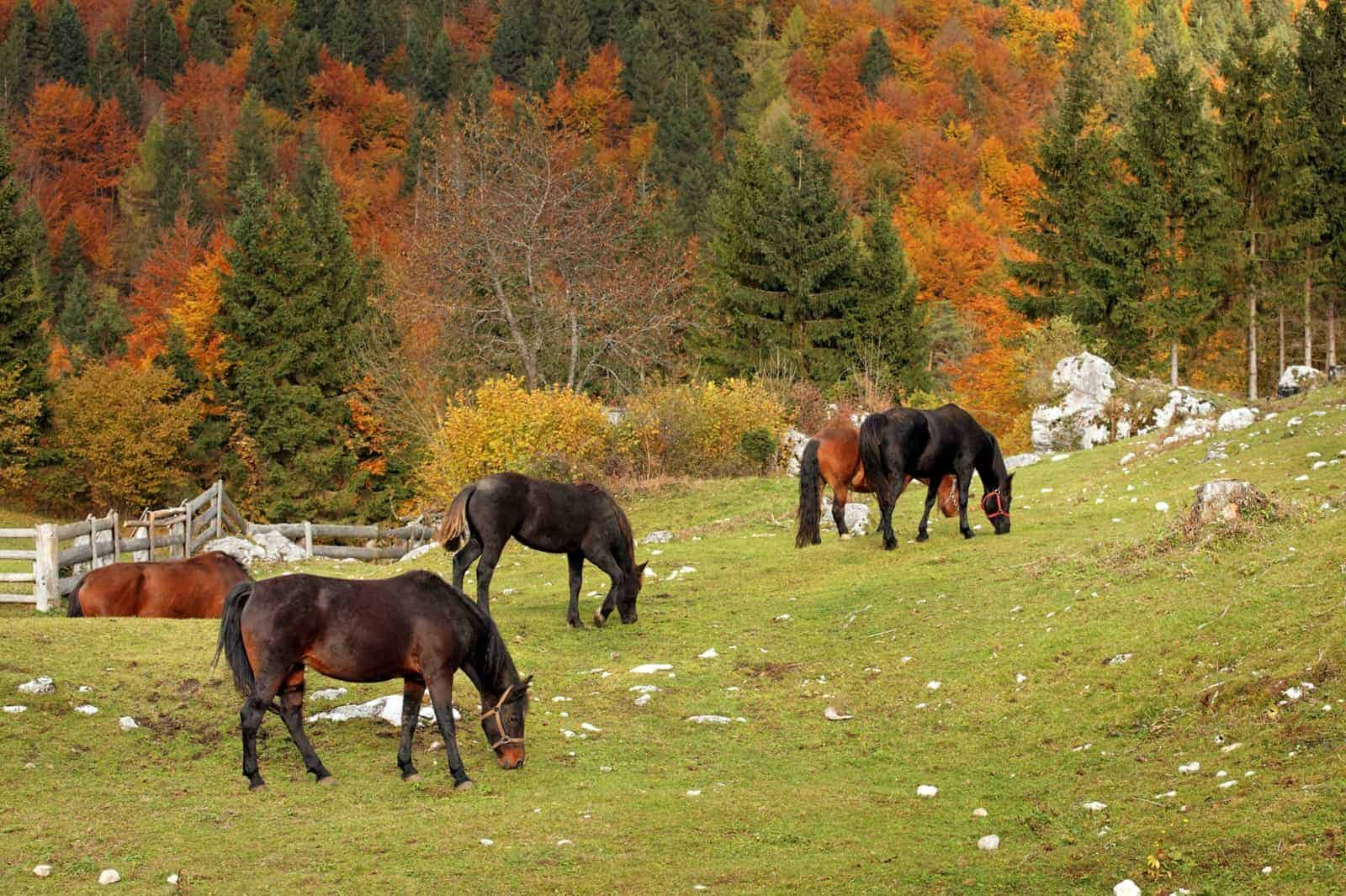 What Is a Maintenance Diet for Horses