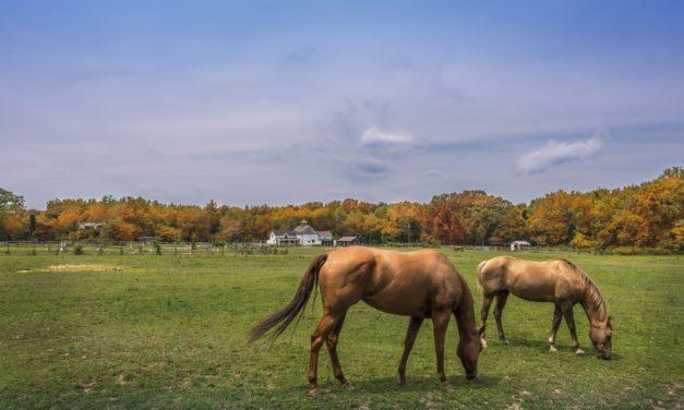 Fixing an Overgrazed Horse Pasture