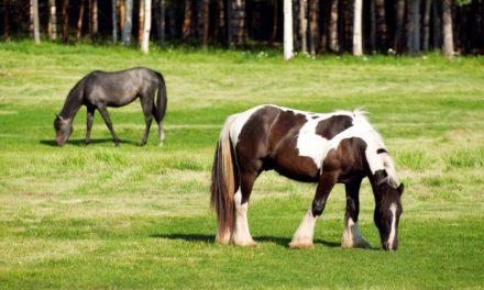 A Look at Pony Club's Feeding Rules