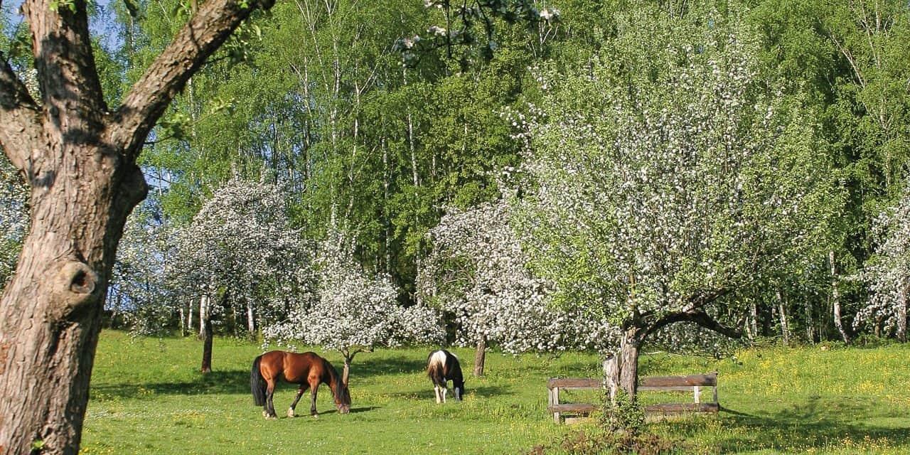 Pasture Management for Parasite Control