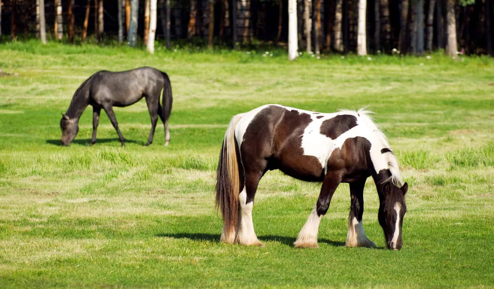 Pasture Management 101: Starting a New Horse Pasture from ...