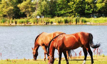 Second Potomac Horse Fever Case Confirmed in Kentucky