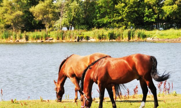 Potomac Horse Fever Confirmed in New Hampshire Horse