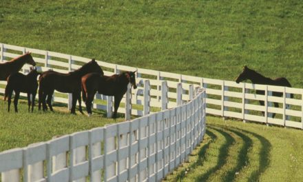 Emerging Equine Diseases: What You Should Know