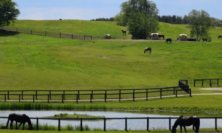 Methods to Reduce Water Pollution From Horse Manure