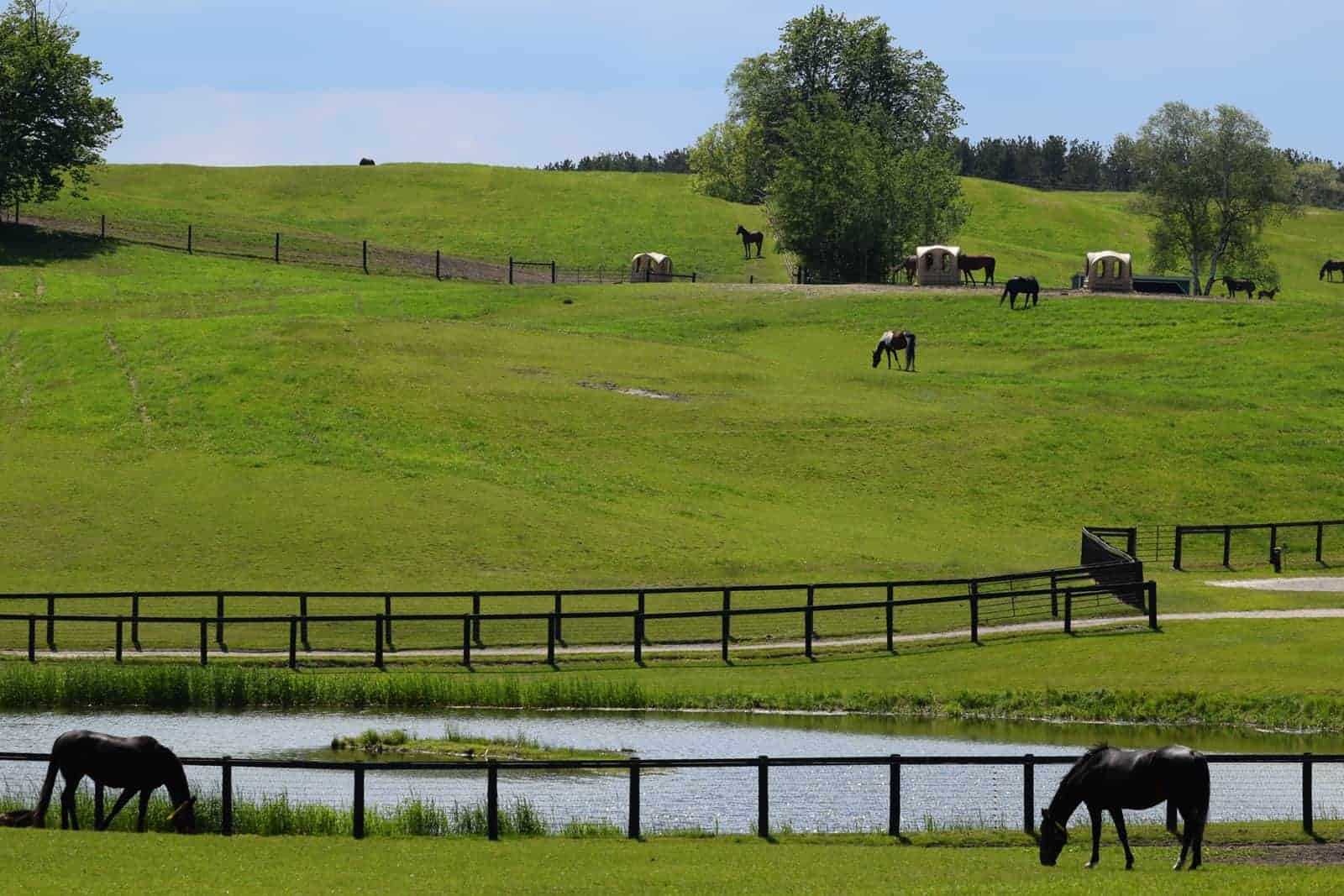 Methods to Reduce Water Pollution From Horse Manure - The ...