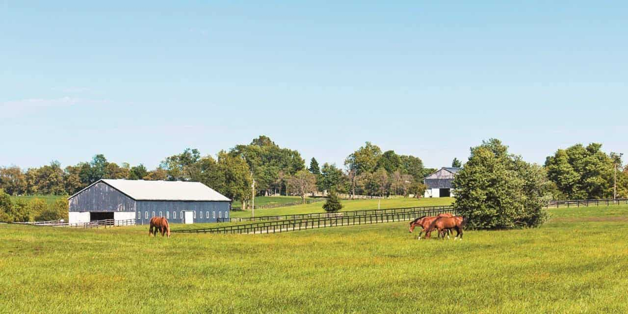 Using Herbicides For Horse Pasture Weed Control