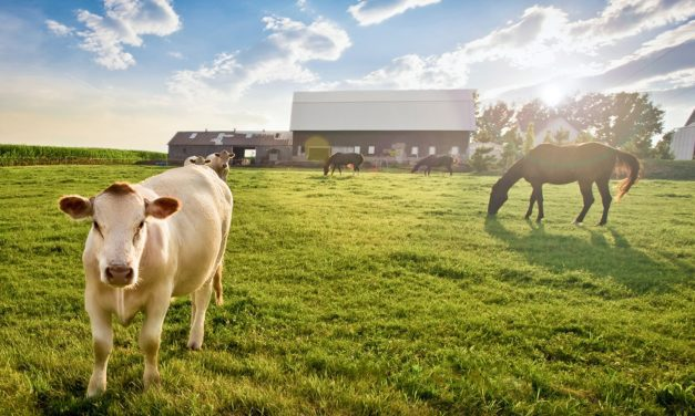 Interspecies Health Threats: Is Your Horse at Risk?