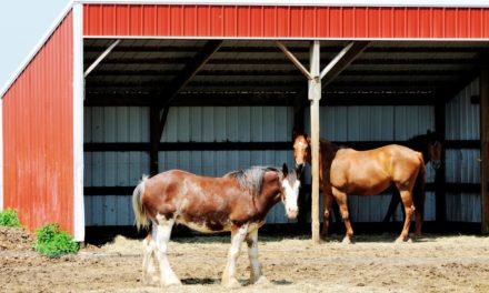 Don't Restrict Horses to Shelters in Hot Conditions