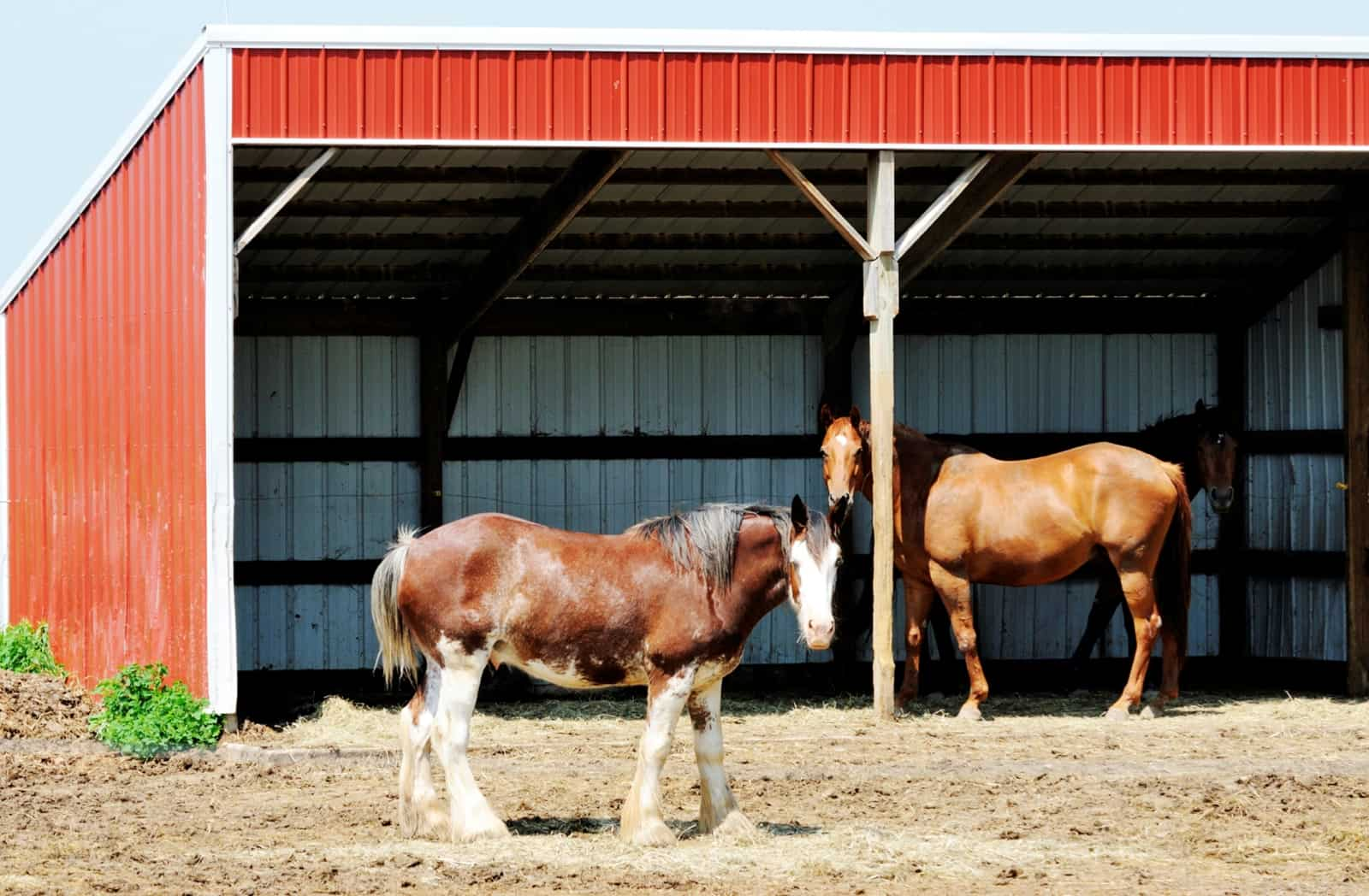 T Restrict Horses To Shelters In Hot