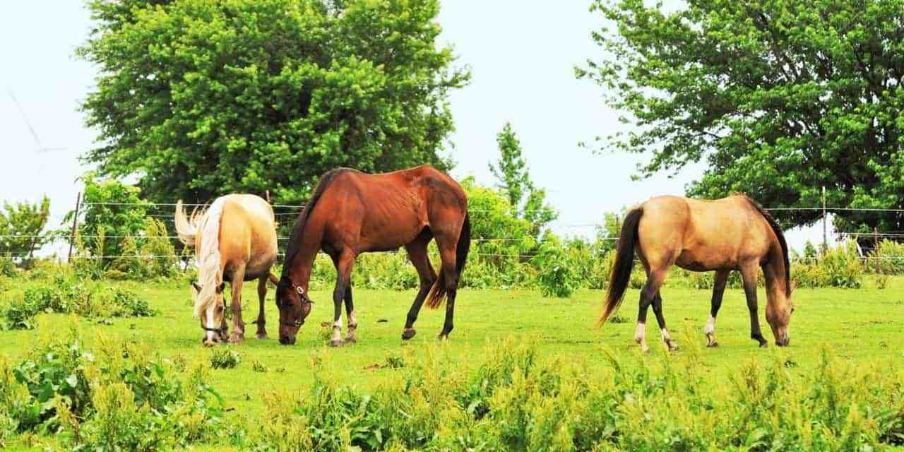 Weed Management Plans For Horse Pastures