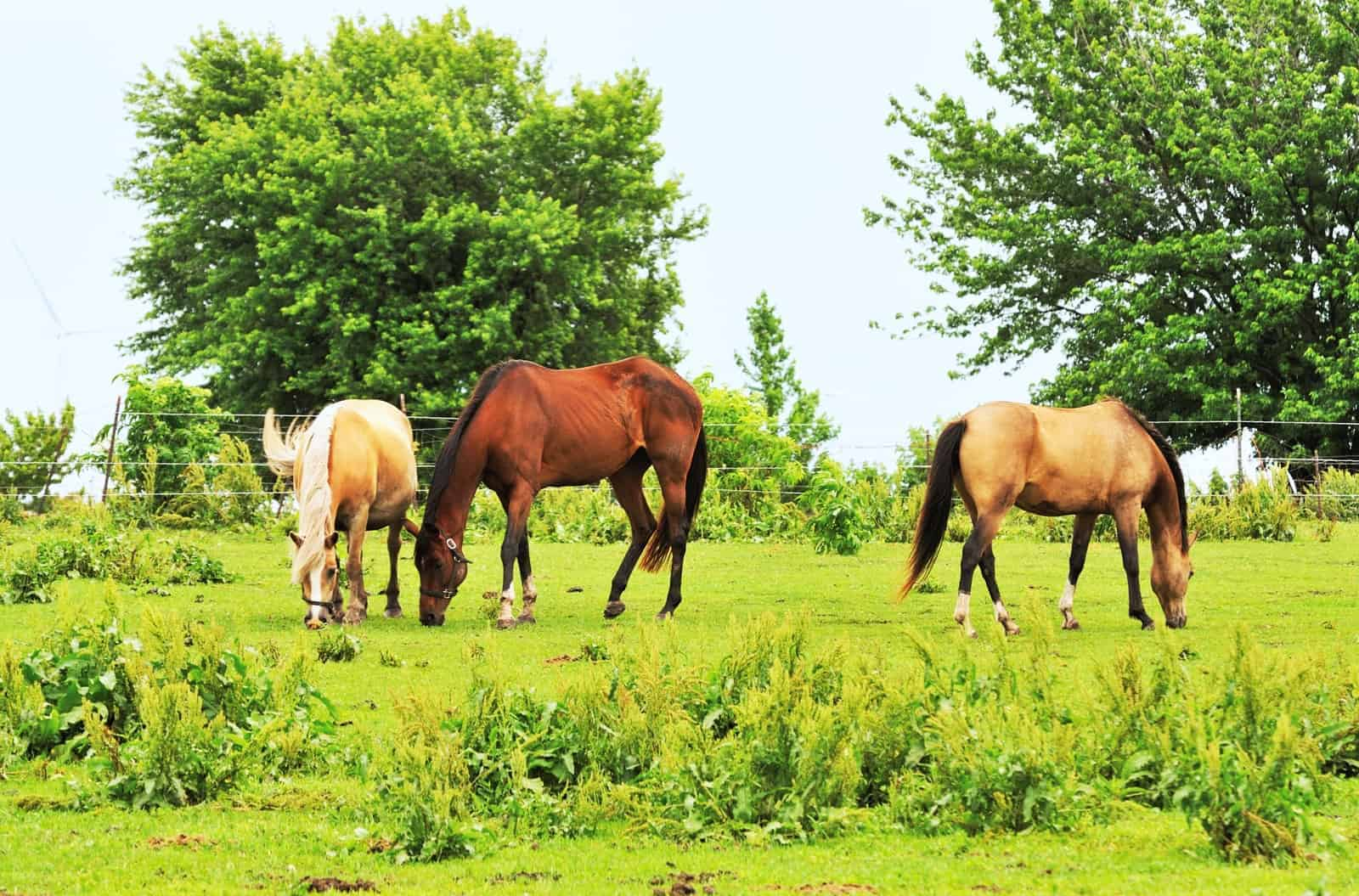 Weed Management for Small Horse Properties