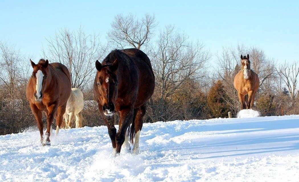 Finally Winter Wimps Out >> Winter Is Coming Are Your Horses And Farm Ready The Horse