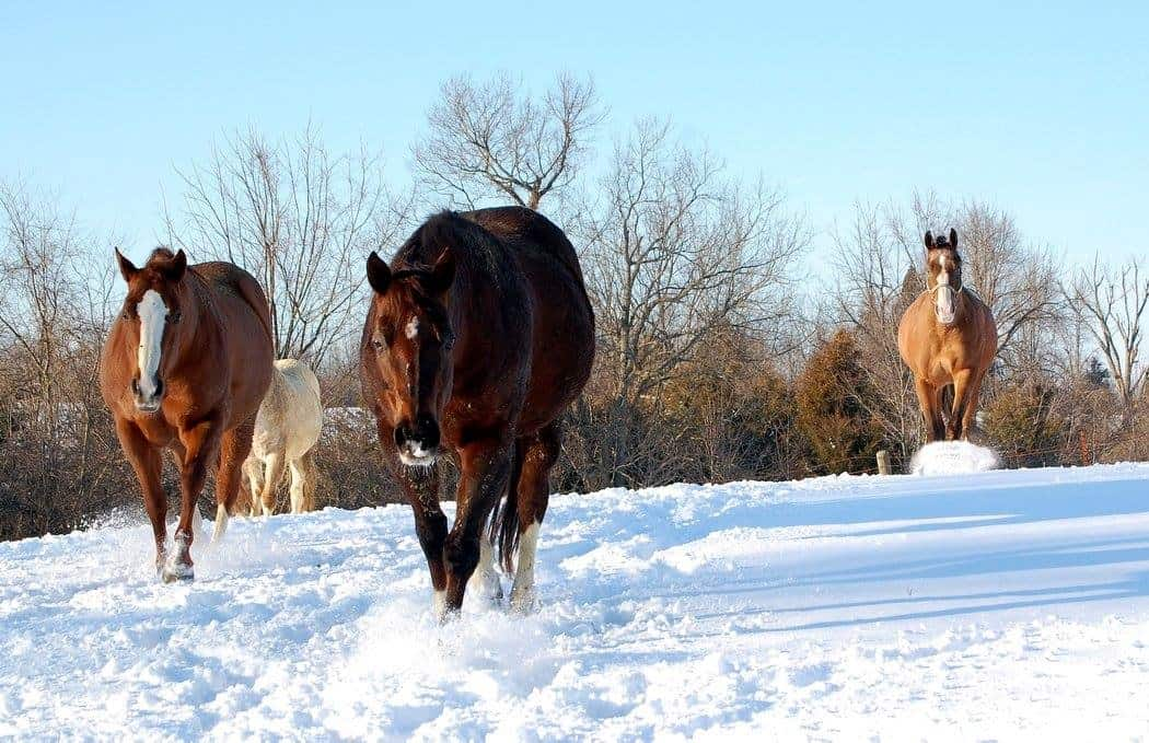 Early Cold Blast Prompts Livestock Cold Stress Warning