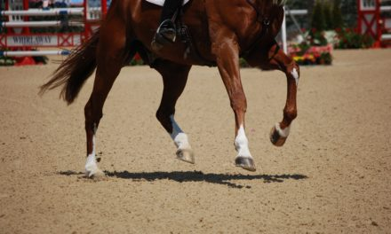 10 Equine Joint Support Resources on TheHorse.com
